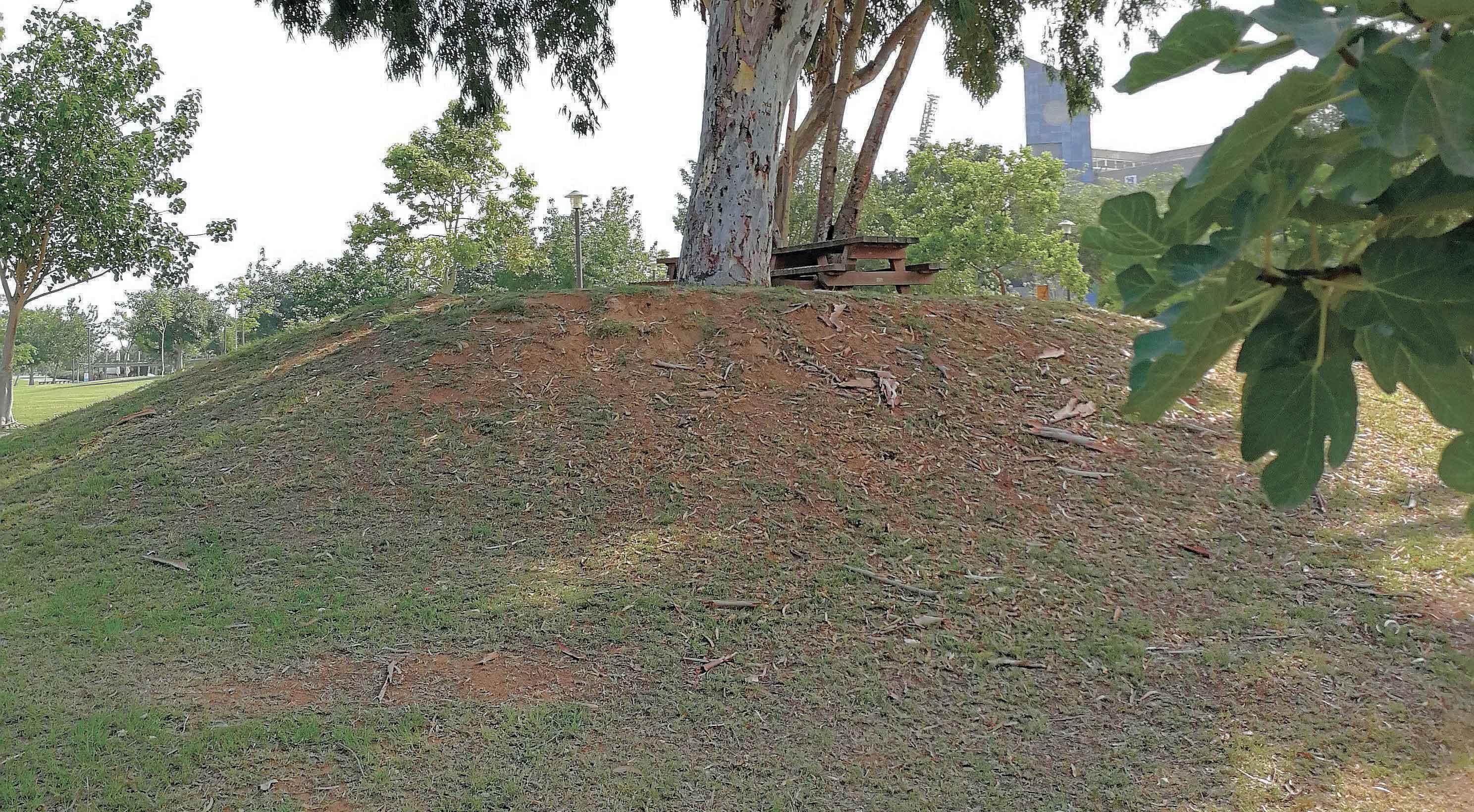 הגבעה בפארק הרצליה. צילום עזרא לוי