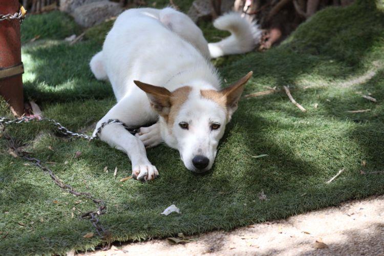 ביוטי. צילום: רונן מחלב, SOS חיות