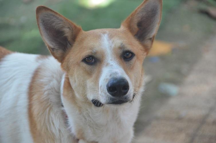 הכלבה ג'פרי. צילום: רונן מחלב, S.O.S חיות