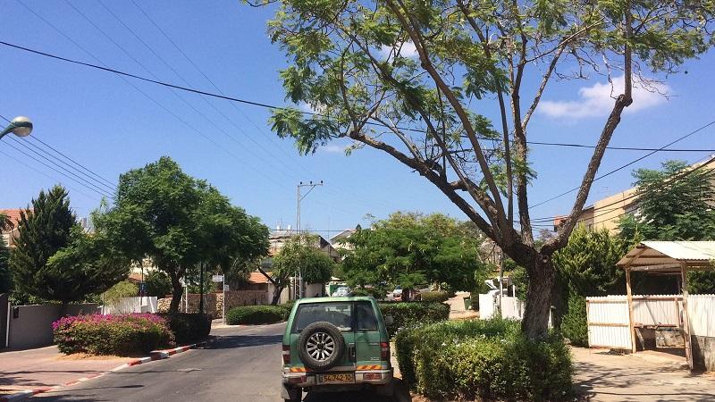 """עצים המיועדים לכריתה ברחוב צה""""ל. צילום: נועה פפרברג"""