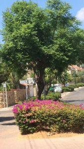 """רחוב צה""""ל בשכונת נווה עמל. צילום: נועה פפרברג"""