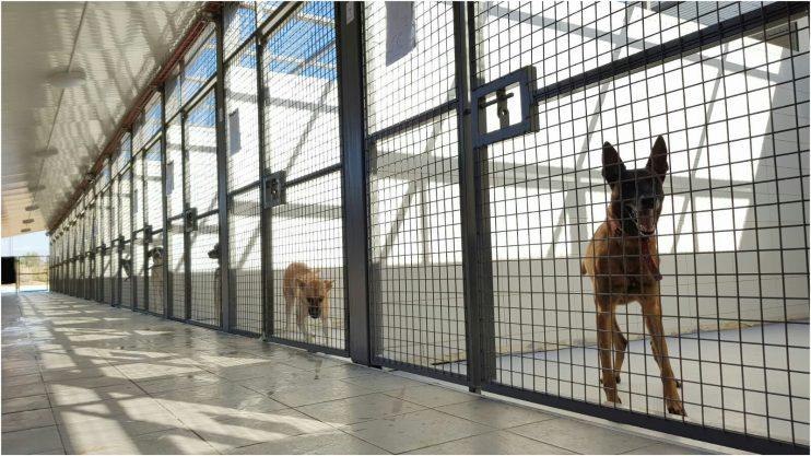 כלבייה חדשה בהרצליה. צילום עיריית הרצליה