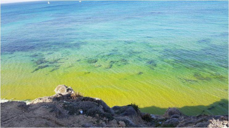 הכתם הצהוב בחוף אפולוניה. צילום: רם זאבי