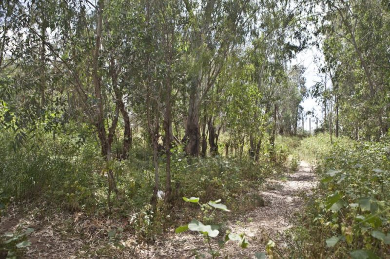 יער אוסישקין. צילום שרונה לימן