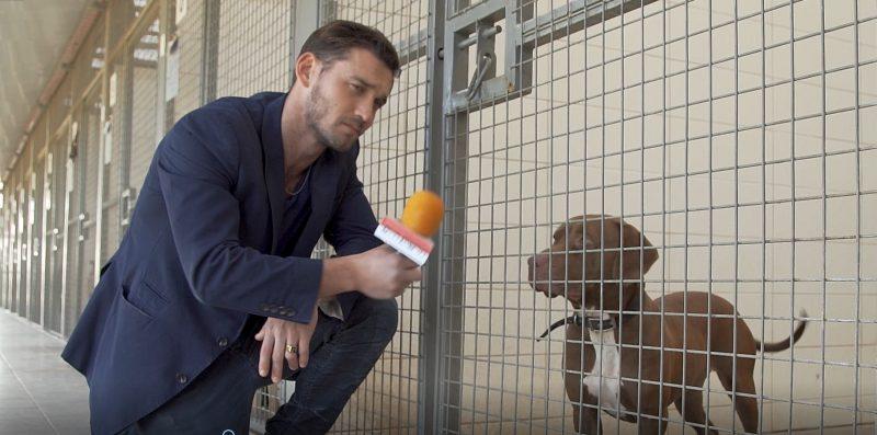 דין מירושניקוב ורוז הכלבה