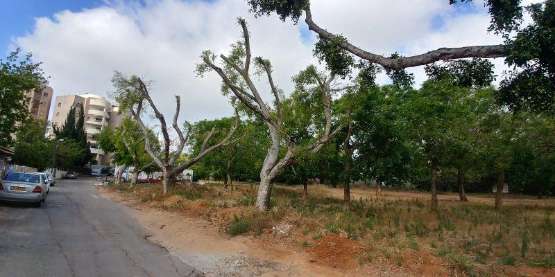 העצים בסמטת ניסנוב