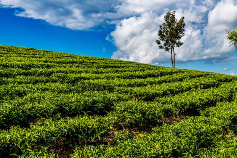 שמאי מקרקעין מומלץ לנחלה חקלאית. תמונה ממאגר Shutterstock