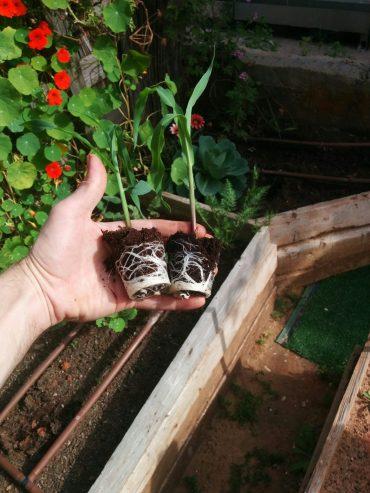כאן תצמח גינה. צילום עצמי