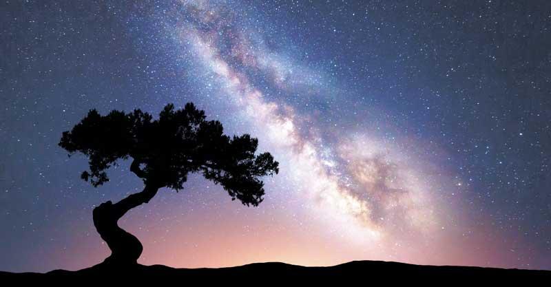 בית הלחמי עץ משאלות צילום אי.אס.אי.פי