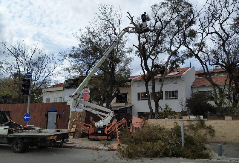 ספיידר גיזום עצים: רמה גבוהה של מומחיות (צילום עצמי)