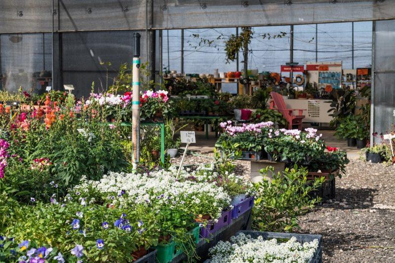 """משתלת דרום השרון: לתכנן את הגינה שתמיד חלמתם (צילום: יח""""צ)"""