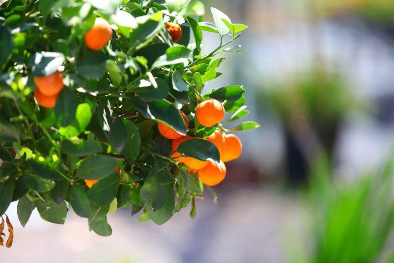 """משתלת דרום השרון: הגינה המיטבית שתתאים לצרכים שלכם (צילום: יח""""צ)"""
