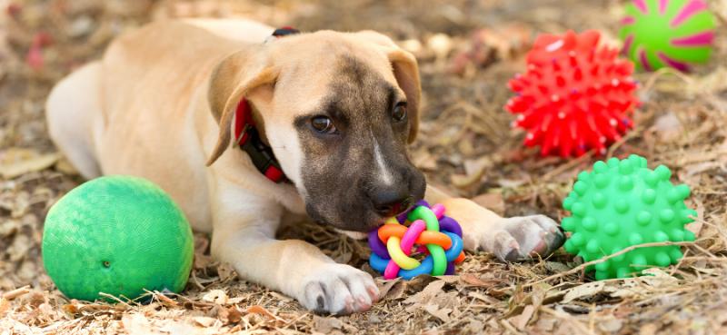 """מומחה הכלבים אסף חילו: """"טיול עם הכלב היא החופשה החדשה בעידן הקורונה"""". צילום: Canva"""