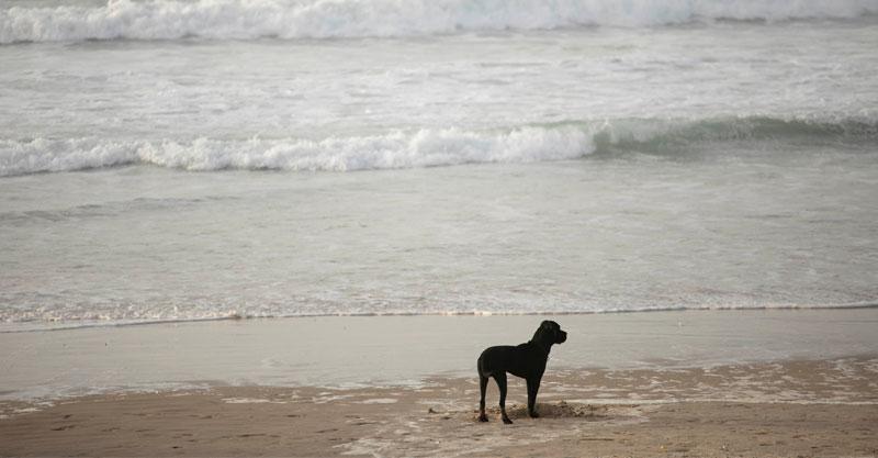 כלב בים
